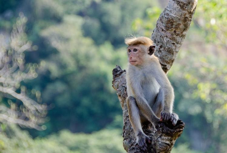 बदायूं के सिविल लाइन्स थाना क्षेत्र के ग्राम चंदोखर गौटिया में गुरुवार को जहरीले चावल खाने से करीब एक दर्जन बंदर और कुछ पक्षियों की मौत हो गई।